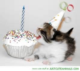 kitty cat birthday kitty happy quotes quotesgram
