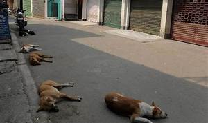 New Delhi's stray dogs to be part of security squad ...