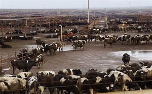 CETA: Selling Off the Farm   IATP