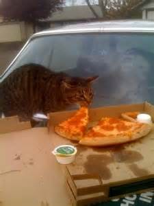 human food for cats 17 cats pizza