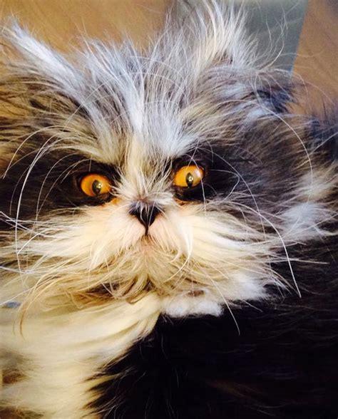 atchoum   cat    evil death stare animals