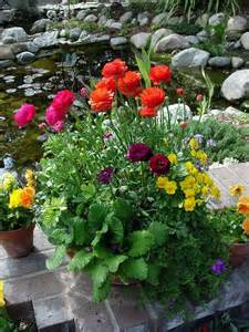 Container Garden Spring Flowers