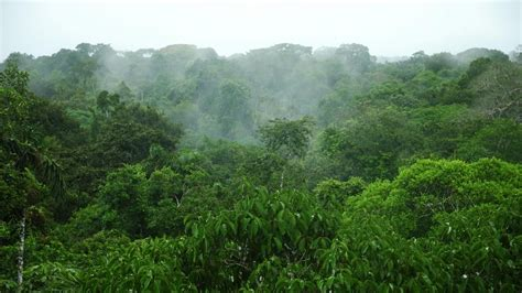 amazon canap what is the average rainfall in the amazon rainforest