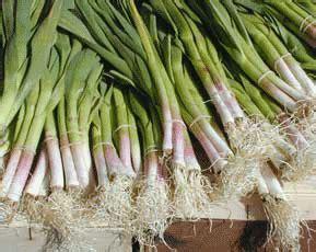 cuisine asperge avez vous déjà goûté l ail vert une recette en bonus