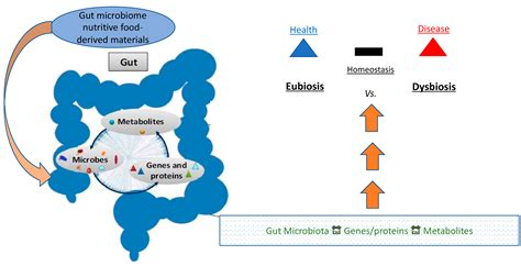 biomedicines  full text  gut microbiome