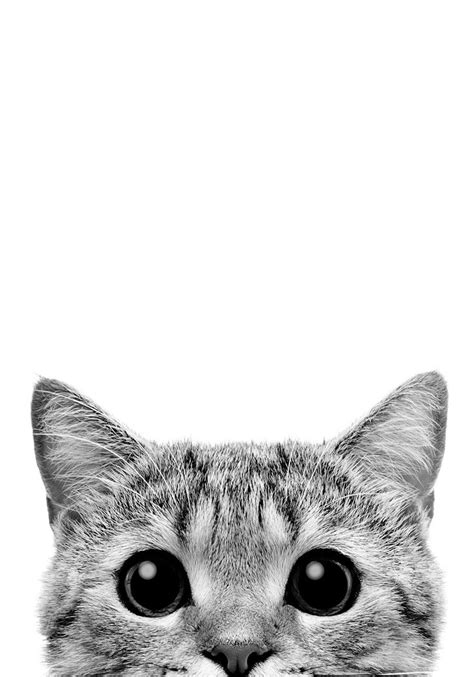 Kitty peeks PRINTABLE Poster black and white minimalist
