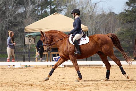 riding horse horseback horserookie college equestrian rookie advice