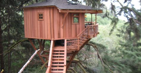 treehouse masters fined  illegal treehouse  oregon