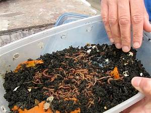 Worm Composting 101: All You Need to Know about this ...