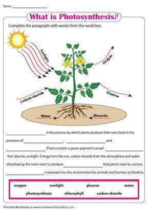 photosynthesis   photosynthesis worksheet