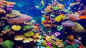 Auf Rechnung Bestellen Bedeutet : was fressen die korallen was fressen ~ Themetempest.com Abrechnung