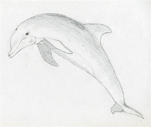 Draw a dolphin ~ Jus 4 kidz