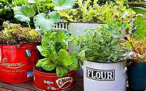 Grow Your Own Vegetables Good Greens In Containers And