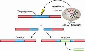 Genome Editing By Crispr
