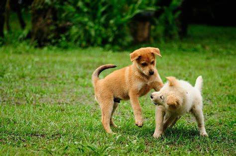 Reasons Why Puppies Play