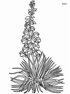 printable yucca flowers coloring pages coloringpagebook