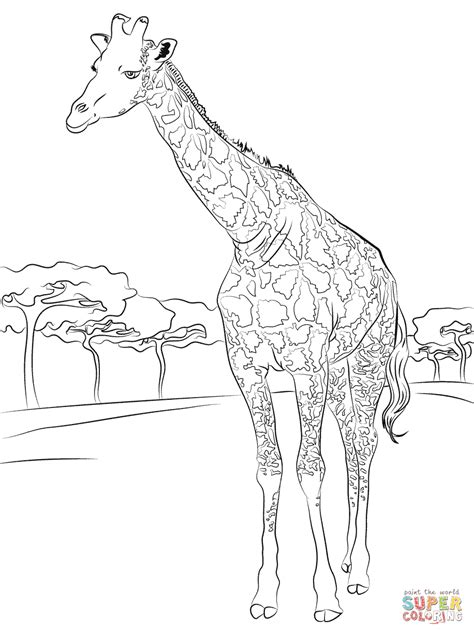 Kleurplaat Koe Zonder Vlekken by Beautiful Giraffe Coloring Page Free Printable Coloring