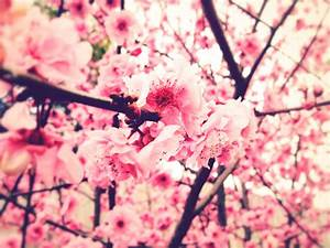 Pink Flowers Tumblr 3 Desktop Background ...