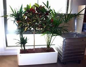 plantes dinterieur palmier et plante grasse dans leur bac With bac plantes interieur design