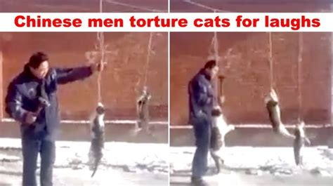 chinese men hang cats hit    hammer repeatedly