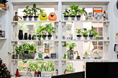 Plants Can Go On Shelves Too, If The Area Is Sunny Enough