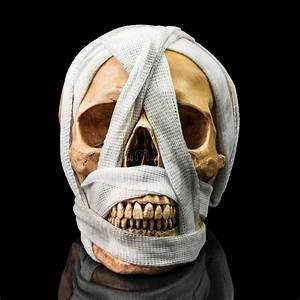 Human Skull Diagram Stock Image  Image Of Occipital
