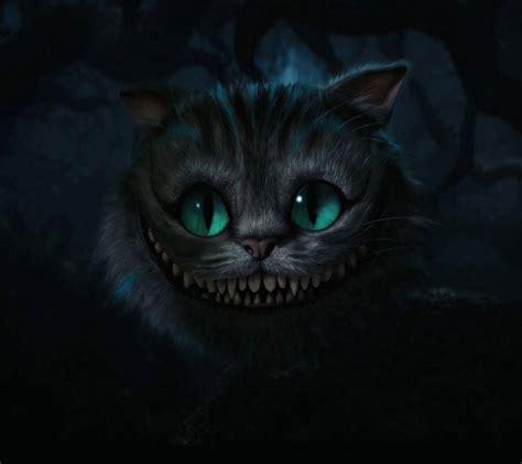 horror cat hd wallpaper  spicyhot    zedge
