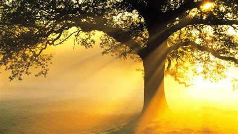 tree of light song 3 hours best relaxing minimalist voice meditation relax stress relief spa