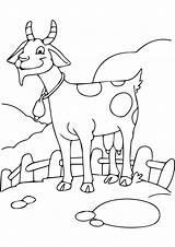 Goat Coloring Funny Printable Parentune Worksheets Preschoolers sketch template