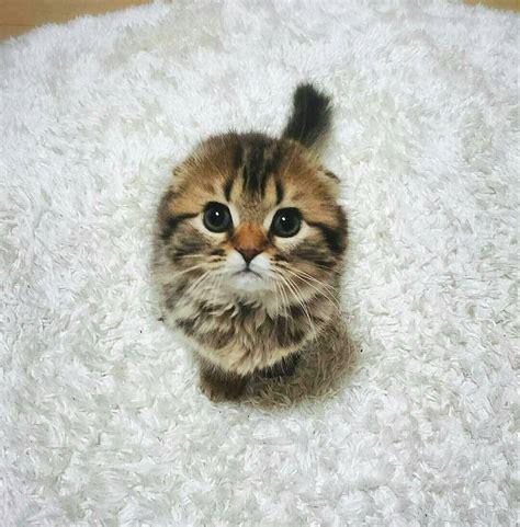 image chat mignon 20 chatons trop mignons qui vont vous donner envie de caresser votre 233 cran web wamiz