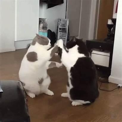 Cat Gifs Cats Funny Hilarious Fight Cartoon