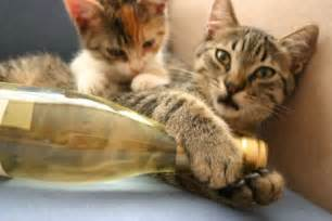 cat wine stop whatever you re doing there s a wine for cats now