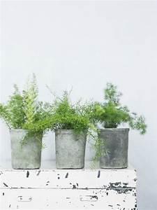 Blumenkübel Bepflanzen Vorschläge : die besten 25 zierspargel ideen auf pinterest asparagus fern chinesische geldpflanze und ~ Whattoseeinmadrid.com Haus und Dekorationen
