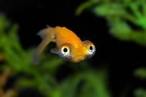 Welche Fische Passen Zusammen Aquarium : das wasser im aquarium ist tr b ursachen l sungen ~ Lizthompson.info Haus und Dekorationen