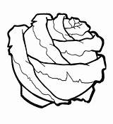 Cabbage Coloring Pages Vegetables Fruits sketch template
