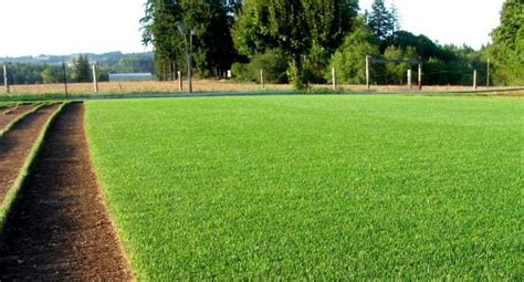 Park Avenue Turf's Blue Rye Sod Blend Is Perfect For