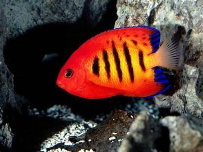 Fishes Wallpapers Desktop