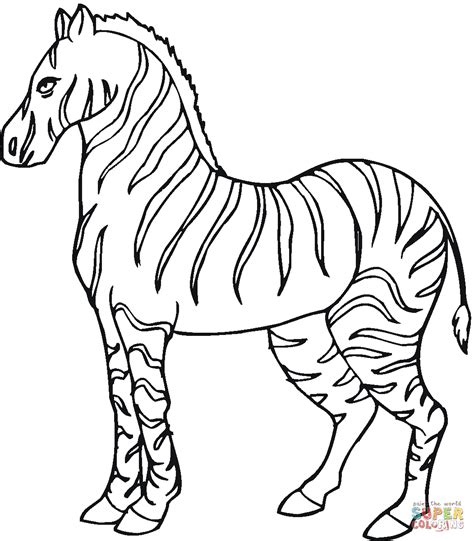 zebra coloring page zebra 6 coloring page free printable coloring pages