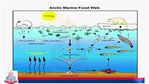 Pgc Lectures  Features Of Aquatic Ecosystem