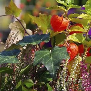 Balkonpflanzen Herbst Winter : balkonk sten im winter bepflanzen inspirationen und tipps garten news garten ~ Sanjose-hotels-ca.com Haus und Dekorationen