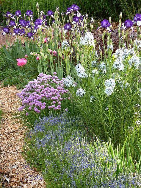 25 best ideas about allium schoenoprasum on