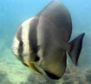 wedding proposals batfish the great barrier reef australia