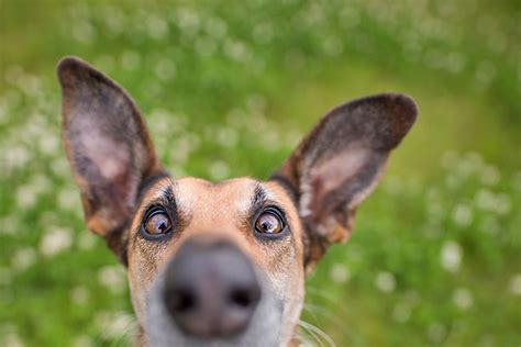 top tips dog photography amateur photographer