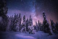 Snowy Trees at Night