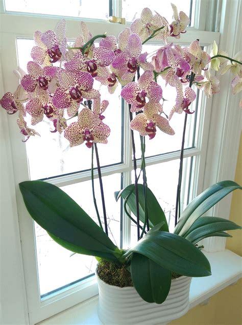 best indoor flower plants the iowa gardener care for indoor flowering plants the gazette