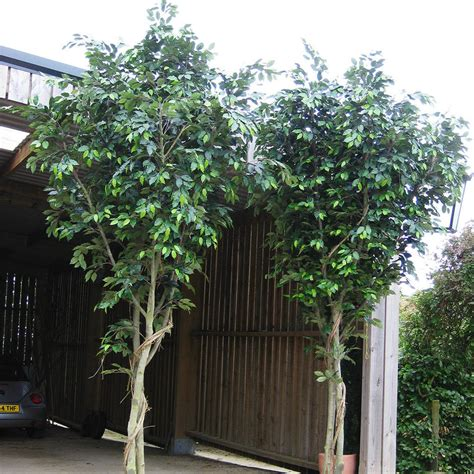 large ficus tree buy large indoor faux ficus tree the worm that turned 3651