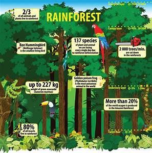 The Magical Rainforest