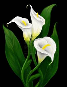 calla lily painting | calla lilies by invisiblehinge ...