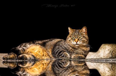 Animali Di Cortile Gatti Di Cortile Juzaphoto
