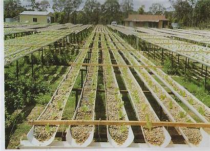 Hydroponics Hydroponic Gravel Commercial System Gardening Nft